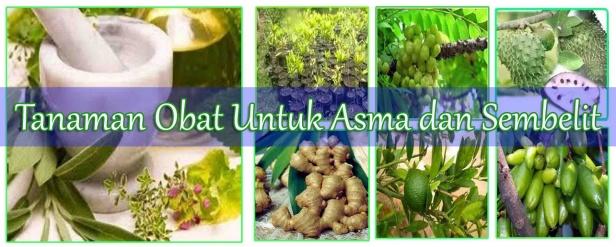 Tanaman Obat Untuk Asma dan Sembelit